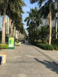 Une belle allée de palmiers