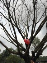 Un cœur/ fraise / ballon 🎈