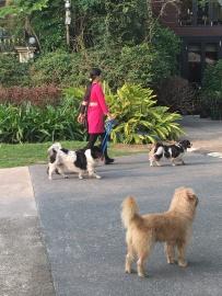 Ils aiment les chiens .