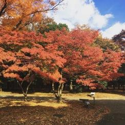 C'est beau l'automne 🍁
