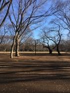 Yoyogi Parc