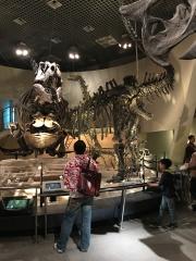 Les squelettes de dinosaures , les filles ont adoré !