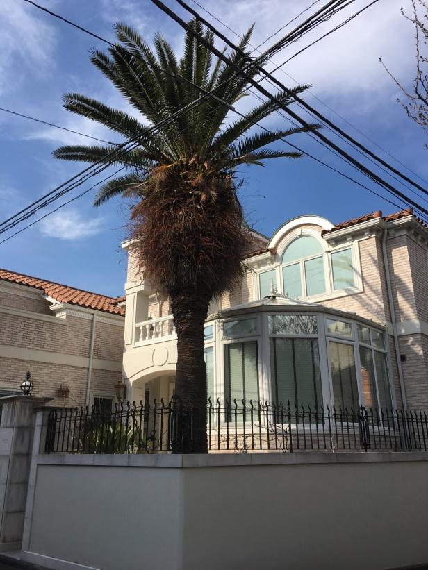 des palmiers à Tokyo