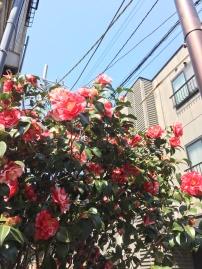 des couleurs fleurissent !