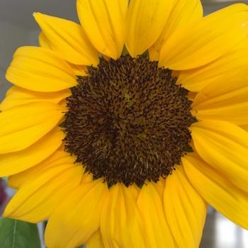 Un soleil sur ma table
