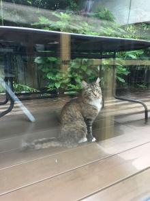le chat des voisins est content que nous soyons rentrés !