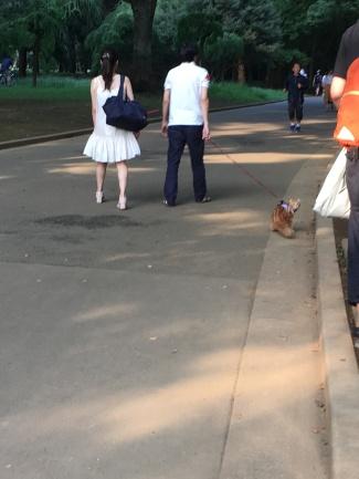 oui , tu peux promener ton chien , ton lapin , ou ici ton chat !