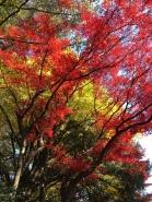 L'automne à Tokyo !