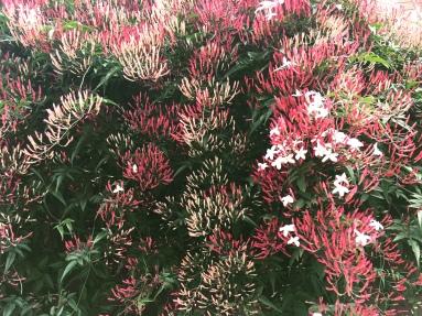 Je ne connais pas leur nom mais ces fleurs sentent bon !