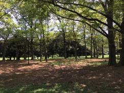 on s'est promenés dans des parcs